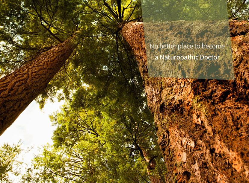 Boucher Institute, School of Naturopathic Medicine (ND) | Vancouver
